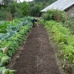 cocagne_potager_1280-opt